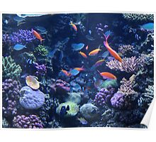 Monterey Bay Aquarium, California Poster