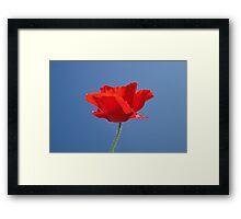 Red Against Blue Framed Print