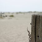 Old Fence Pole by Henrik Lehnerer