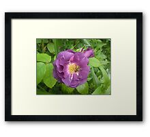 Gifted by Nature Framed Print