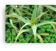 a plants life Canvas Print