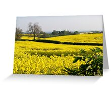 Fields of Yellow (2) Greeting Card