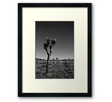 Joshua Tree V Framed Print