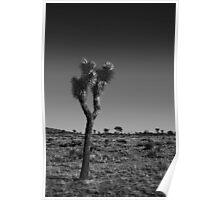 Joshua Tree V Poster