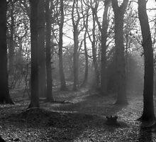 Dog Wood Mist by DMHotchin
