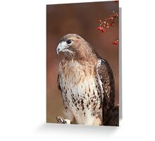 Red -Tailed Hawk ~ Greeting Card