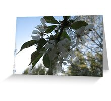 Cherry blossom loads of flowers Greeting Card