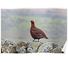 Red Grouse #2 Poster