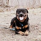 Happy Rottie by tanya breese