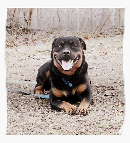 Happy Rottie Poster