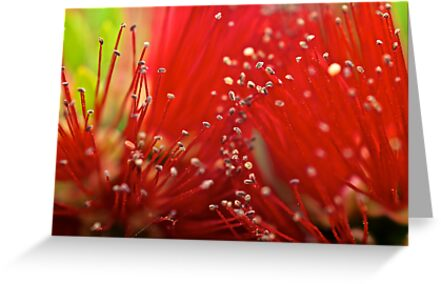 Bottle Brush by D-GaP