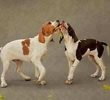 Puppies and a Feather Kiss by Alicia Adamopoulos