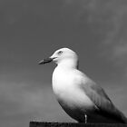 Crown Seagull by GandK