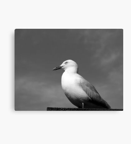 Crown Seagull Canvas Print