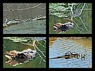 Turtles Rule the Pond by MotherNature