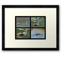 Turtles Rule the Pond Framed Print