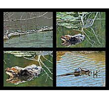 Turtles Rule the Pond Photographic Print