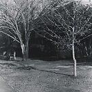 Winter Trees on Campus by Jennifer Ingram
