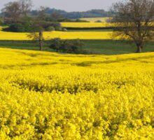 Fields of Yellow Sticker