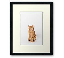 Ginger cat. Framed Print