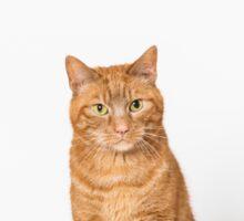 Ginger cat. Sticker