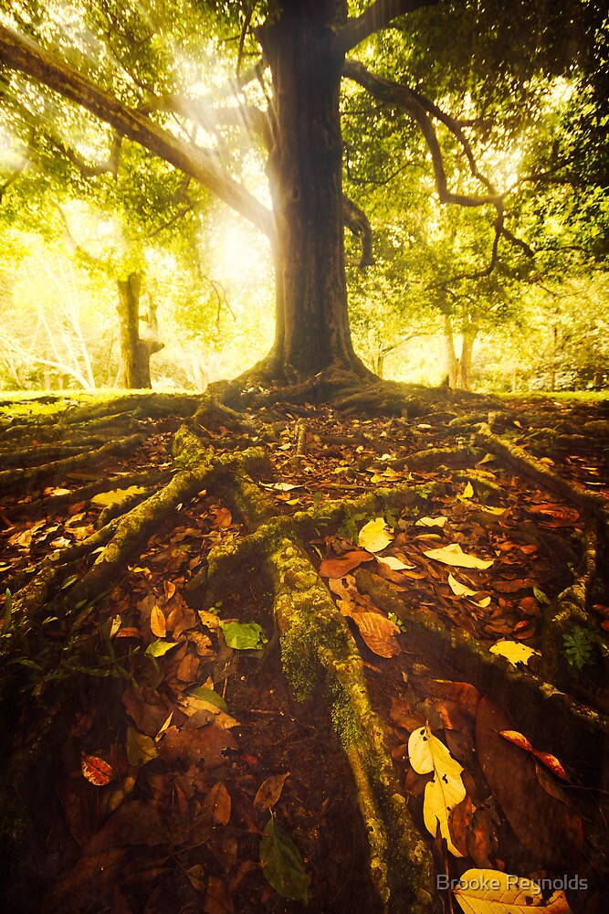 spellbinding roots by Brooke Reynolds