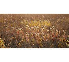 Autumn Glow Photographic Print
