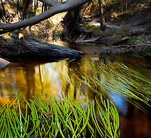Complexity at Billimina Creek by Alex Fricke