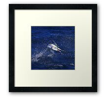 Marlin Canvas or Print - Juvenile Black Marlin Framed Print
