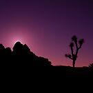 Joshua Tree and Rock by thammerlund