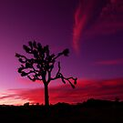 Joshua Tree Sunset by thammerlund