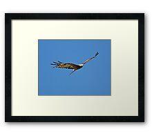 Hunting kite Framed Print