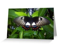 butterfly series Greeting Card