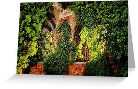 Garden Wall by Barbara  Brown