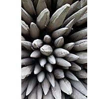 Wooden poles Photographic Print