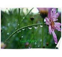 Daddy's daisy droplets Poster