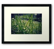 Dew grass Framed Print