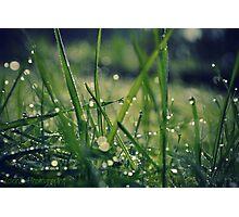 Dew grass Photographic Print