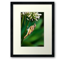 Small Miracles... Framed Print