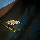 Heron Catches Fish by AjayP