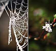 of frosty webs and flowers... by Gregoria  Gregoriou Crowe