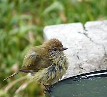 Thornbill by Meg Hart