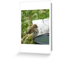 Thornbill Greeting Card