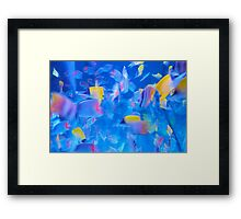 Blue Colourful Aquarium Photograph Framed Print