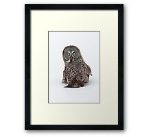 Great Grey Owl ...in your face. Framed Print