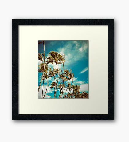 Hawaiian Palm Trees In The Wind Framed Print