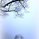 Snowman by ©The Creative  Minds