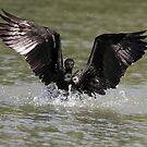 """""""The landing of the Cormorant."""" by debjyotinayak"""