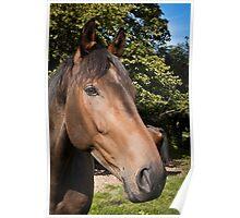 Equine portrait with colour Poster