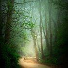 Along the Path by Svetlana Sewell